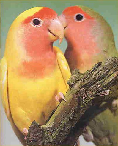 lovebirds.jpg